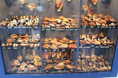 Колеекция ракушек
