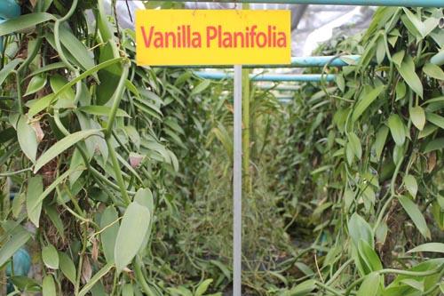 Плантация ванили
