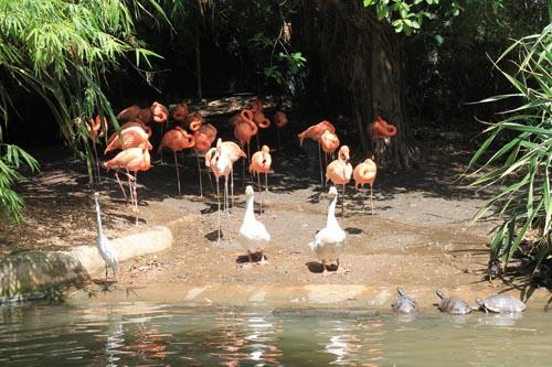 Фламинго в Манати парке