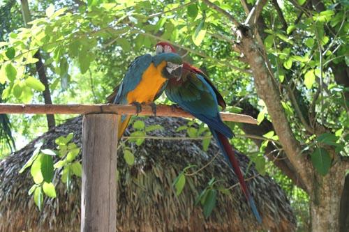 Попугаи в Манати парке