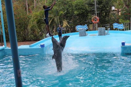 Шоу дельфинов в Манати парке