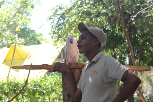 Попугай в Манати парке