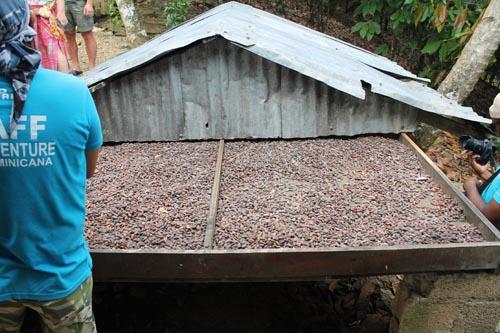 Сушилка какао бобов