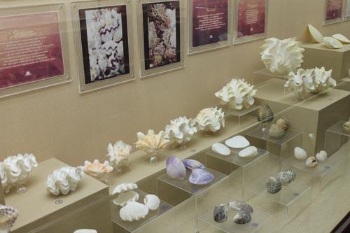 В музее ракушек