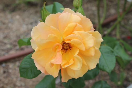 Цветок в Испании