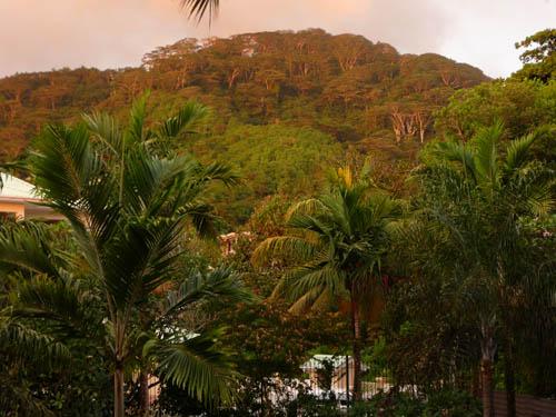 Вид из окна отеля Coral Strand