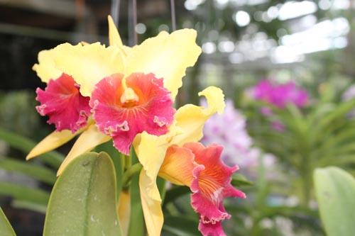 Орхидения