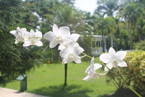 Орхидея в отеле Barcelo Bavaro Beach