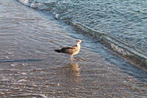 Птица на морсокм берегу