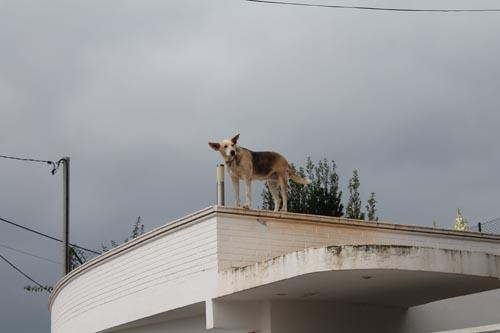 Собака встречает паровозик