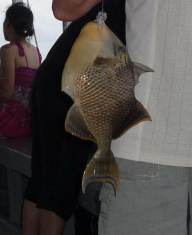 Наша рыбка